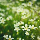 White and Yellow Flower Meadow by StefyCanFly