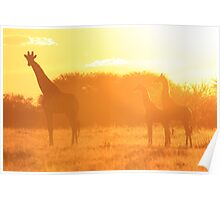 Giraffe - Yellow Beauty - African Wildlife Background Poster