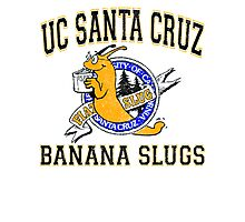 UC Santa Cruz Banana Slugs Photographic Print
