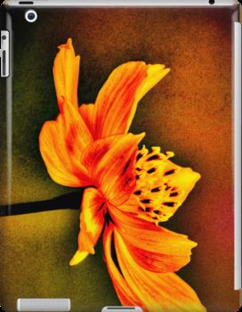 Orange Glow  by LudaNayvelt