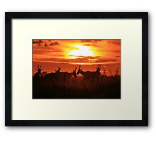 Red Hartebeest - Sun Symmetry - African Wildlife Framed Print