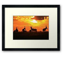 Red Hartebeest - Sunset Beauty - African Wildlife Framed Print