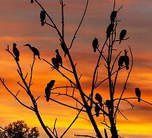 Cormorant tree by Eivor Kuchta