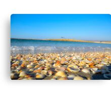 Seashells on the Mediterranean shore. Photographed at Habonim, Israel Canvas Print