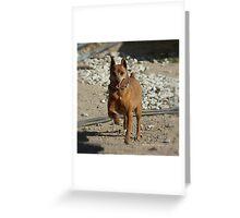 Max Greeting Card