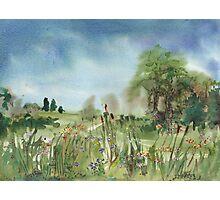 Cattails Landscape Photographic Print