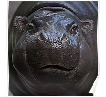 Hippo face Poster