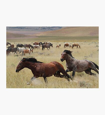 Stallion Chase Photographic Print