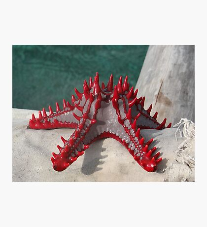 Lone Red Starfish on a wooden dhow 3 Photographic Print