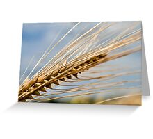 Ear of Barley Greeting Card