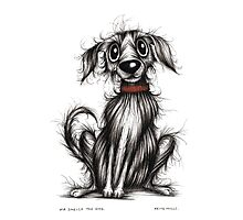 Mr Smelly the dog Photographic Print