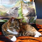 Kitty And Her Tote Bag by Dianne Connolly