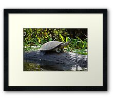 Water Turtle, Photographed in Pampas, Bolivia Framed Print