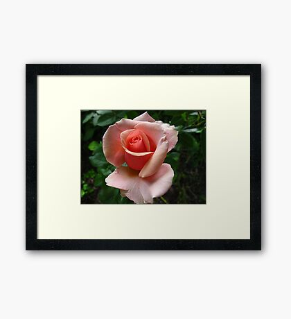 Peach delights Framed Print