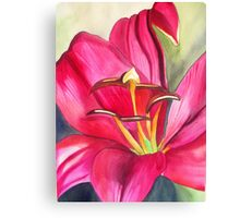 Red Alert day lily watercolour flower Canvas Print