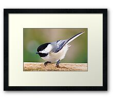 Bundle of feathers Framed Print