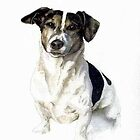 Jack Russell Terrier   by Oldetimemercan