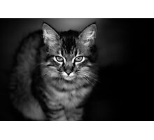 The Cat Who Ate My Sister Sally Photographic Print