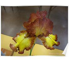 Rustic Iris Poster