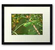 Promethea Caterpillar Framed Print