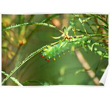 Promethea Caterpillar Poster