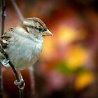 Female House sparrow by Sara Sadler