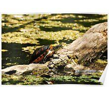 Sanbathing Turtle Poster