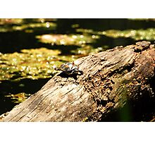 Cute Little Turtle  Photographic Print