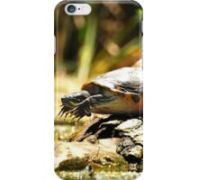 Cute Big Turtle iPhone Case/Skin