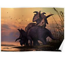 Albertaceratops Pair at Sunset Poster