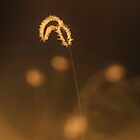 Grass of Light - Nature Background by LivingWild