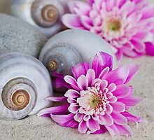Flower and shell by artsandsoul