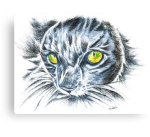 Toby green eyed cat Canvas Print