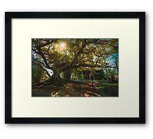 Moreton Bay Giant Framed Print