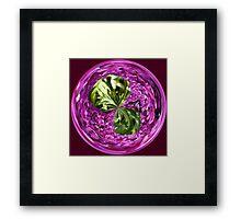 Spherical Buddleia Framed Print