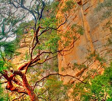 Nature's contrasts .. rock & tree by Michael Matthews