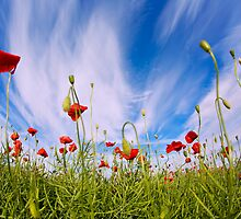 Poppy Fields Forever by VaidaAbdul