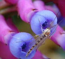 Bromeliad Flower and Gnat by Elisabeth Thorn