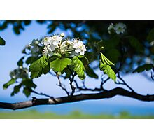 Flower by the Lakefill Photographic Print