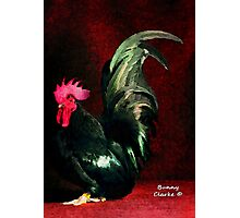 Fancy Chickens:  Crown Me Already!  My Harem is Waiting! Photographic Print