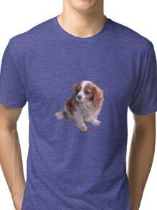 Cute King Charles Spaniel Tri-blend T-Shirt
