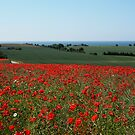 Poppy field  by kostolany244