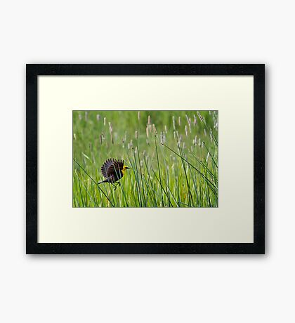 Moving Through Grass Framed Print