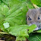 Crouching Photographer, Hidden Mouse by Paul Hickson