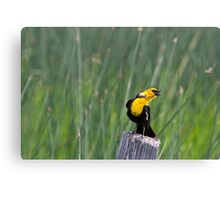 Angling for Dinner Canvas Print