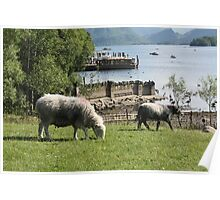 Derwentwater Sheep and Lamb 2 Poster