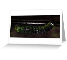 Almost a Butterfly... Greeting Card
