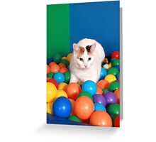Cat Playing in balls Greeting Card