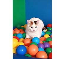 Cat Playing in balls Photographic Print
