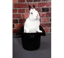 Rabbit out of a hat Photographic Print